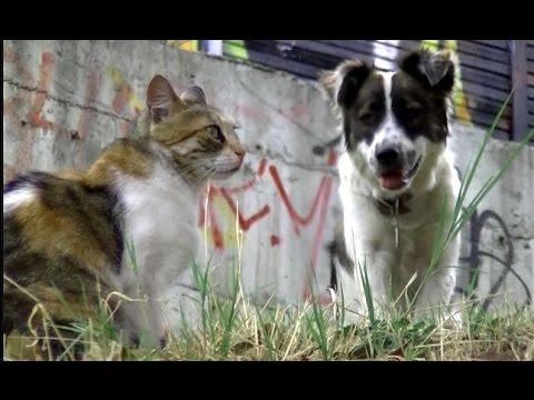 ついに犬まで参加!お供の猫2匹とお散歩しながら子猫たちに出会う仲良し珍道記(後編) - YouTube