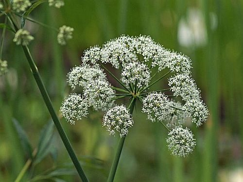 【画像】毒のある植物