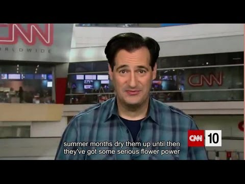 CNN Student News CNN 10| April 18, 2017| English subtitle - YouTube
