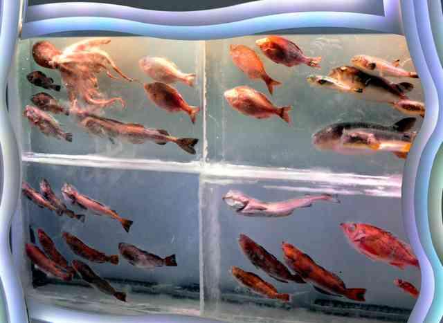 魚介類を氷詰め 津波被災の「氷の水族館」6年ぶり復活