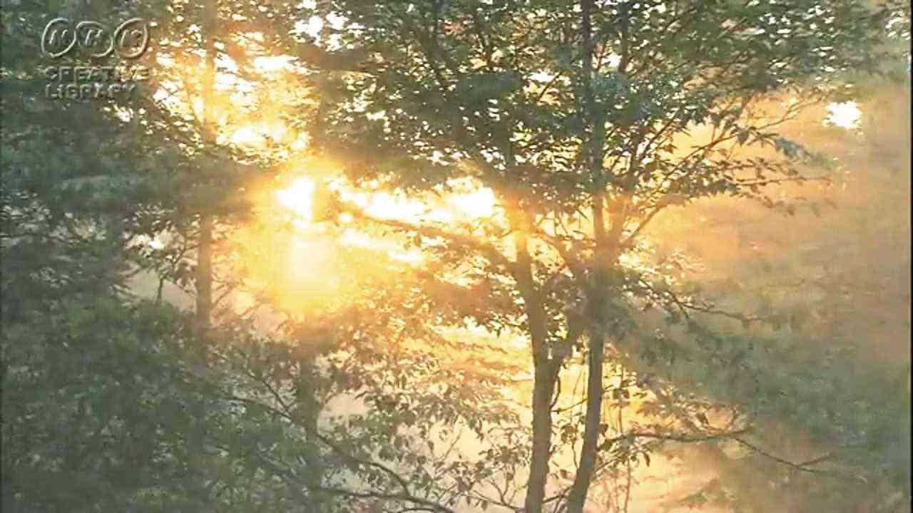 クラシック名曲 グリーグ 『朝』  Grieg- Morning .wmv - YouTube