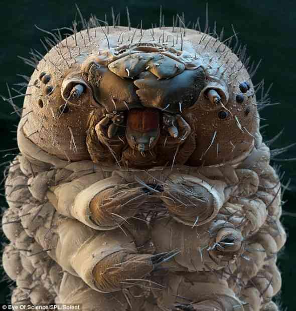 【超閲覧注意】不気味な生物の画像を貼っていくトピ【苦手な方注意】