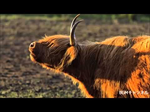 2:爽やかな北欧音楽メドレー(ケルト):作業用BGM - YouTube