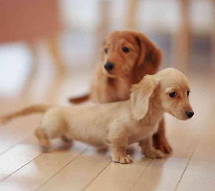 """ペットの名前ランキング 犬も猫も""""男の子""""のトップは「○○」!"""