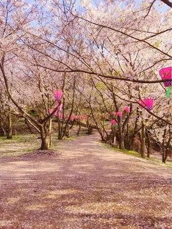 春の小豆島へ!満開の桜と瀬戸内の美味しいものを満喫旅 - じゃらん旅行記