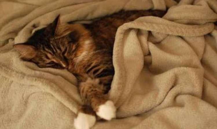 毛布がたまらなく好きな人