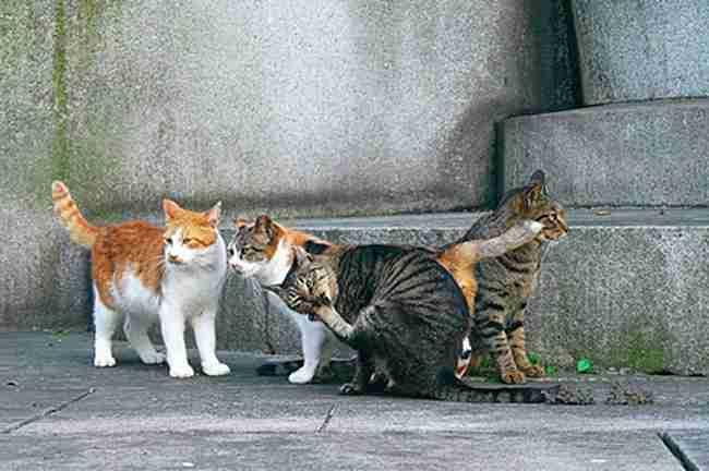 猫10匹中毒死か…名古屋港、死骸から劇物成分