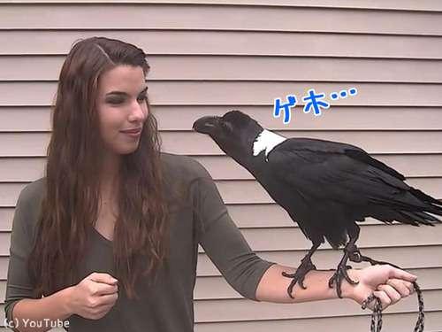 カラスの知能恐るべし…人間の声をそっくり真似する(動画)