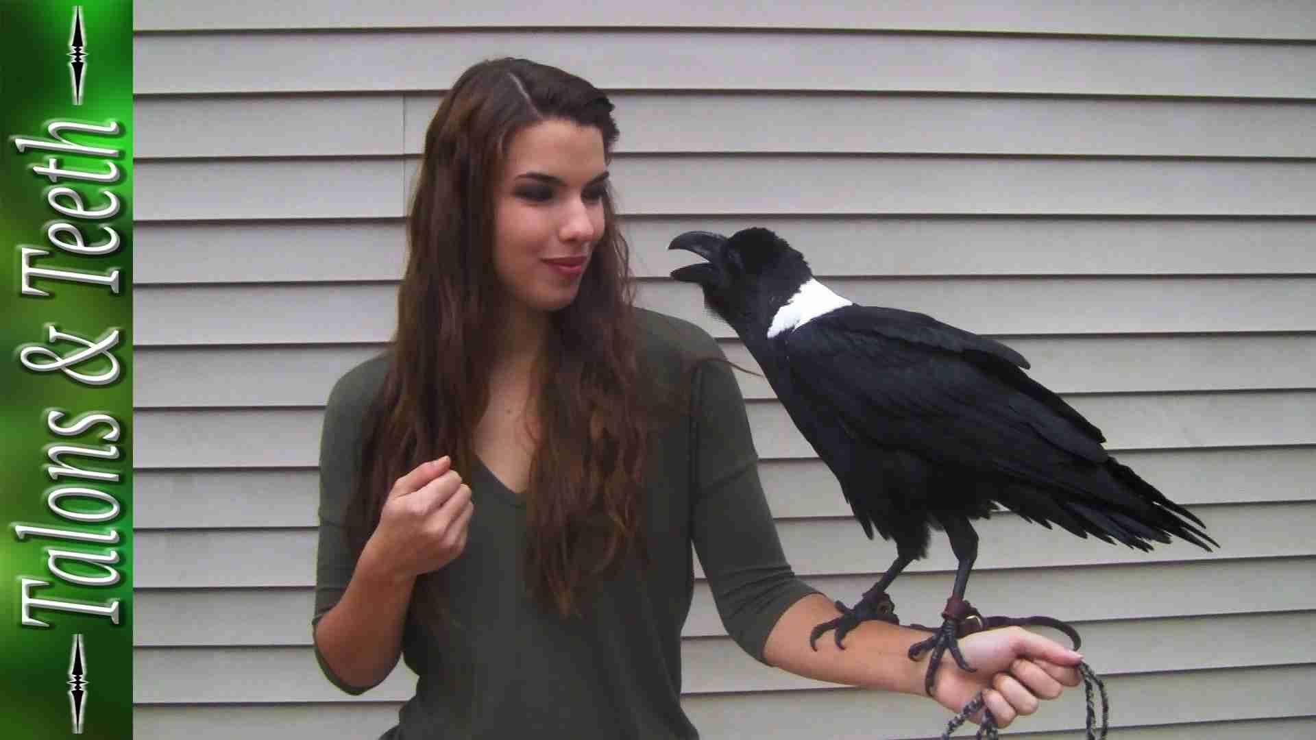Ravens can talk! - YouTube