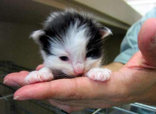 猫52匹を保護、「飼い主」探しています! 個人宅で繁殖、あっという間に増えて手に負えなくなり…旭川市