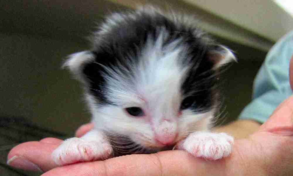 猫52匹を保護、「飼い主」探しています! 個人宅で繁殖、あっという間に増えて手に負えなくなり… - トピックス   sippo(シッポ) ペットのための情報・サービス
