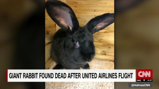 CNN.co.jp : ユナイテッド便で移送の巨大ウサギ、米到着後に死亡が判明