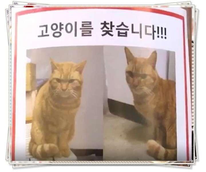 韓国初の猫の駅長が行方不明に、ずさんな管理にネットから批判 -- Record China
