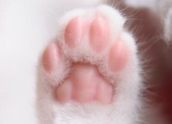 肉球までそっくり!埼玉限定の「猫手焼」カステラがネットで話題