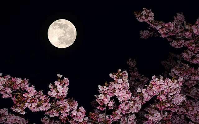 4月11日は年に一度のピンクムーン!『恋愛運』を上昇させるとの噂も