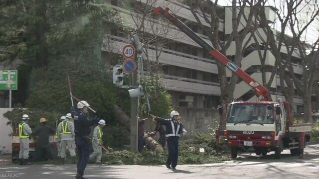 宮城 強風で転ぶなど8人けが 倒木も相次ぐ | NHKニュース