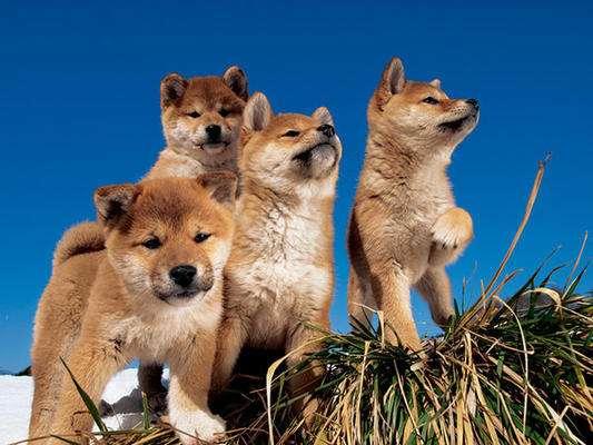 【癒しトピ】可愛すぎる動物たち