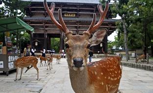 痛いニュース(ノ∀`) : 奈良公園の鹿に噛まれる観光客、6割が中国人だった - ライブドアブログ