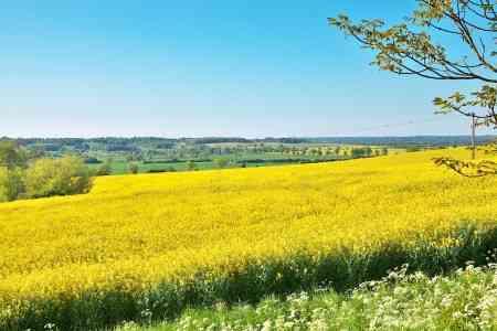 黄色の画像を貼るトピ