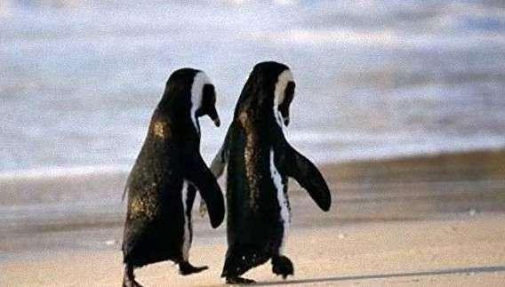 10種の動物の同性愛 : カラパイア