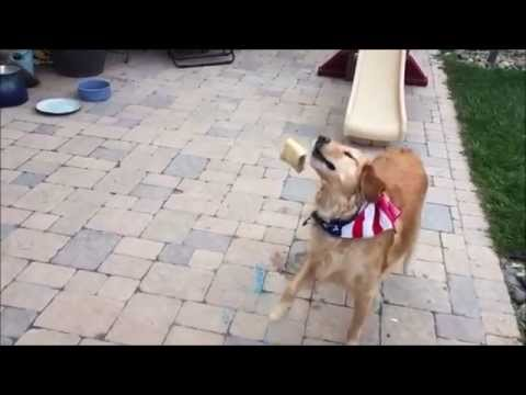 【面白い犬】エサをうまくキャッチできない運動音痴な犬 - YouTube