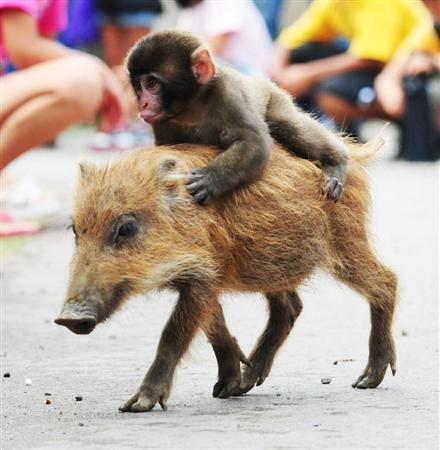 仲良しな動物さんが見たい!