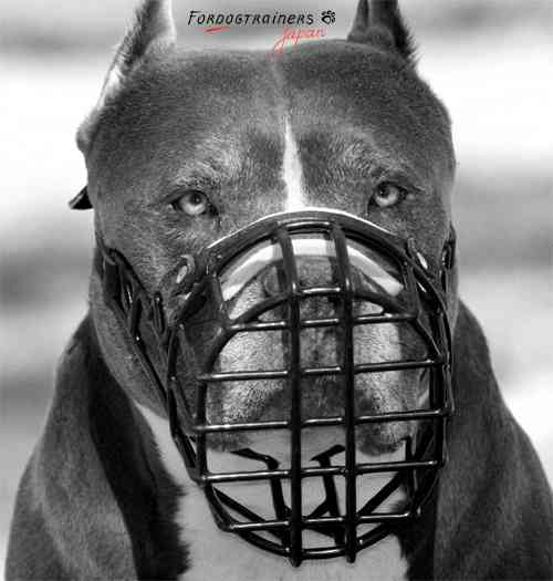 強そうな犬の画像を下さい。