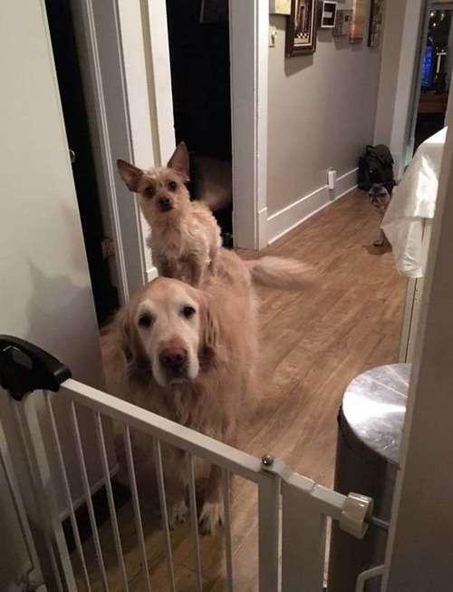 「うちの犬2匹は、ごはんのねだり方がずるい…ダメって言えない」
