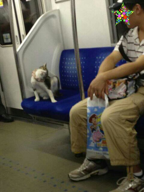 周知:上野の桜や銀座・新宿・池袋・新橋・の看板で猫が寝ているのは猫おじさんによる虐待 - 原宿・表参道.jp