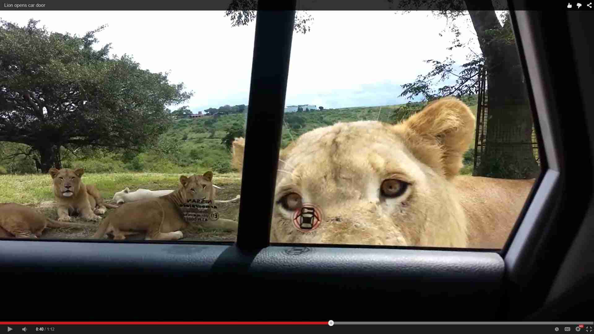 Lion opens car door - YouTube