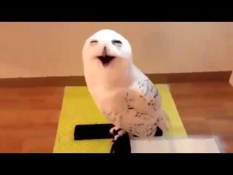 鳴き声が美輪明宏さんなフクロウ - YouTube