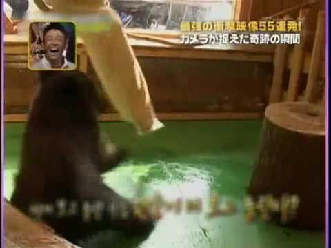 ビビるクマ - YouTube