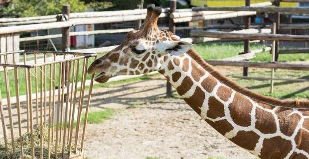 「こういうのは広めねば」動物園で見つけた衝撃的な貼り紙に反響 | BUZZmag