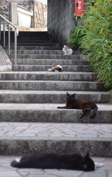 <広島・鞆の浦>楽園のネコ受難 トラバサミ被害相次ぐ 仕掛けた男性「自宅敷地内でのネズミ駆除目的で、法律違反には当たらない」