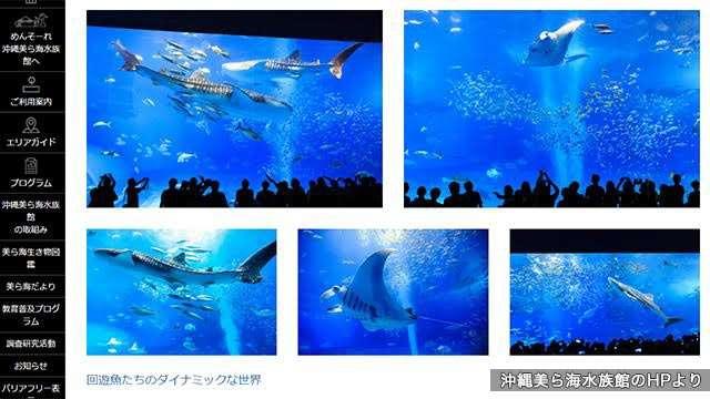 News Up ネットで熱い議論 水族館でのフラッシュ あり?なし? | NHKニュース