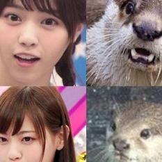 乃木坂46のなぁちゃんこと西野七瀬さんとかわうその画像を交互に貼るまとめ - NAVER まとめ