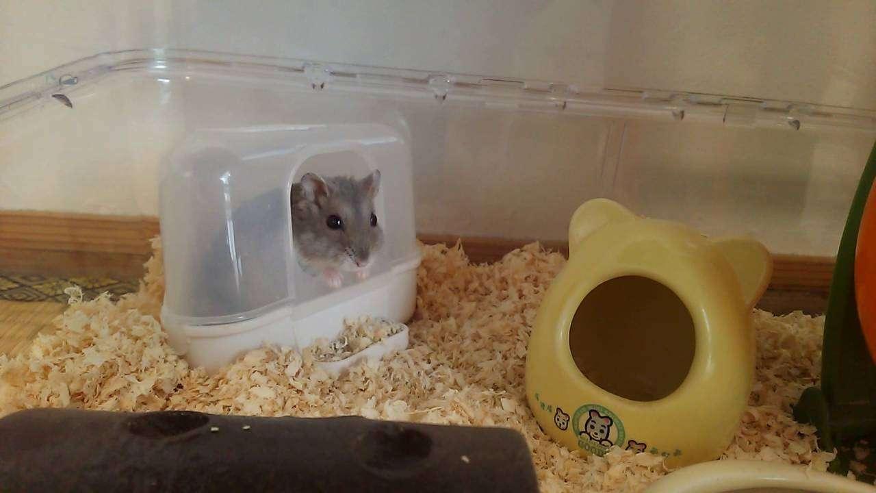 【音量注意】ハムスターのエアー穴掘り - YouTube