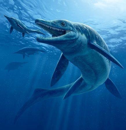 【画像と動画】古代サメ・ラブカをTOKIOが鉄腕!DASHで発見! | 気持ちの考察