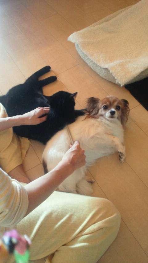 杉本彩が保護した犬の表情が変わりすぎwww  |  毒女ニュース