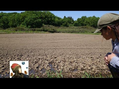 田んぼに水を入れる~30代女ひとりで田んぼの入水式|Rice farming - YouTube