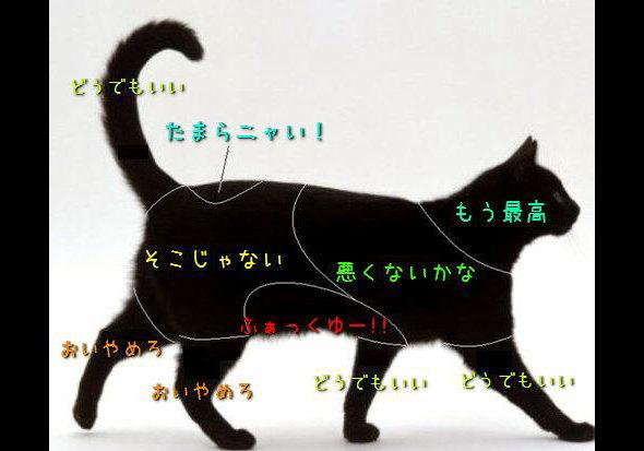 「ネコなで人」をネコ専門の動物病院が募集中 アイルランド