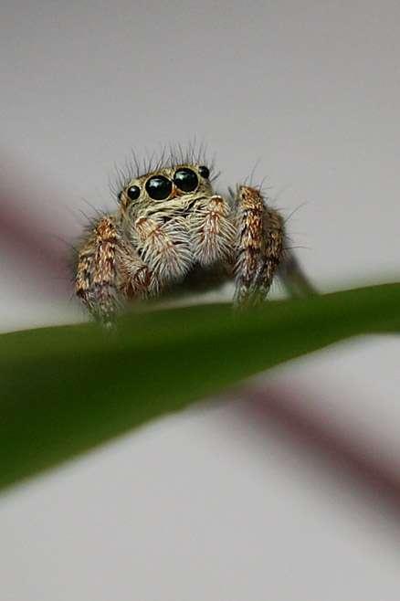 【虫注意】お部屋のクモ、どうしてますか?