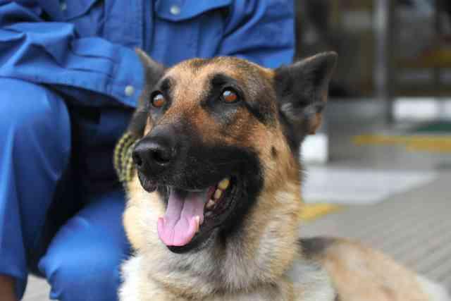 震える男児、深夜3時の発見 嘱託警察犬シータに感謝状 - ライブドアニュース