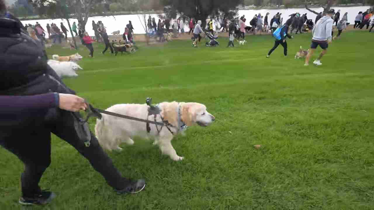 A MILLION Dogs?! Ollie & Toby walking for charity - YouTube