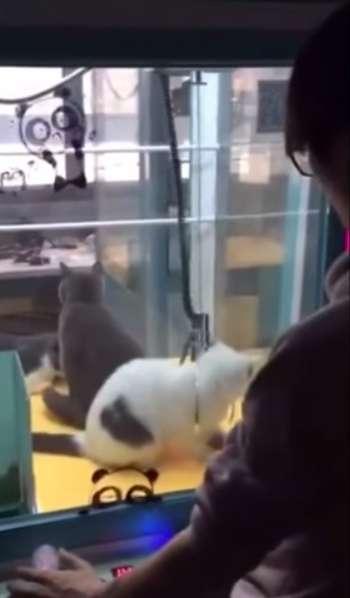 中国で生きた猫を使ったクレーンゲームに小倉智昭キャスター「動物虐待」