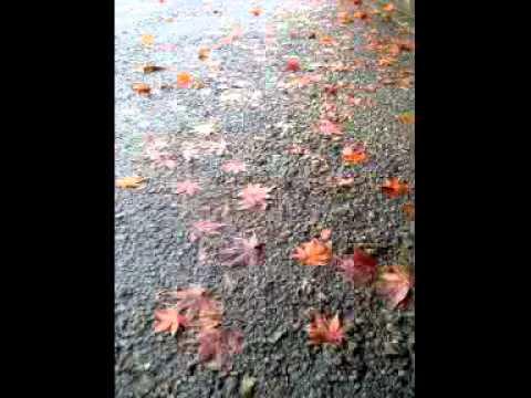 そのあとは雨の中 - YouTube