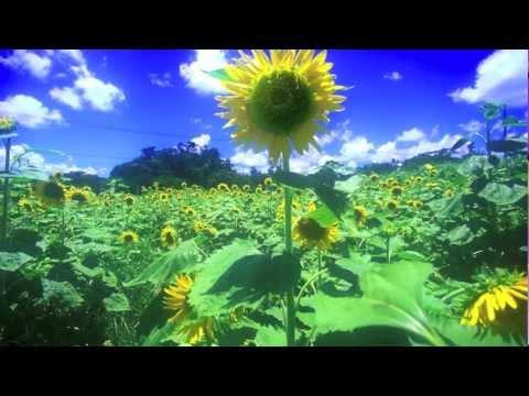 夏影 piano - YouTube
