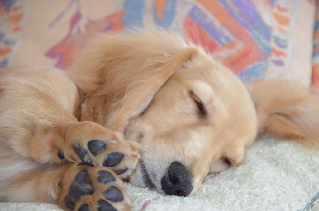 短足の愛らしさを愛でるトピ