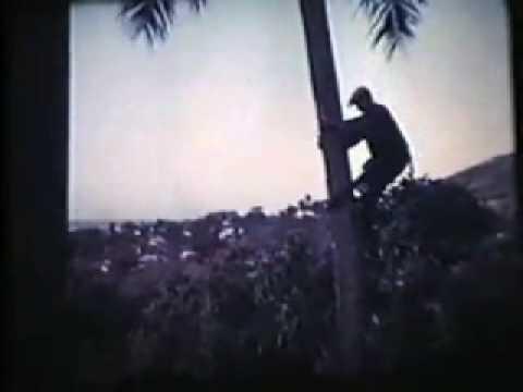 うわさのカム・トゥ・ハワイ - YouTube