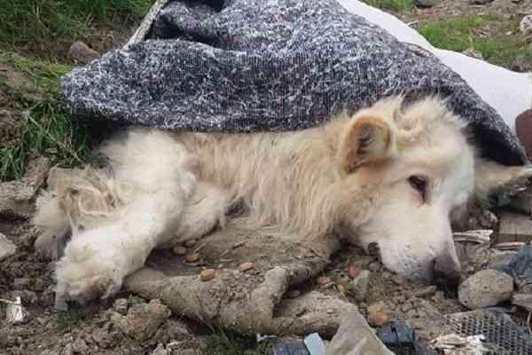 イギリスで病気の犬を捨てた男性に「生涯ペット飼育禁止」が言い渡される